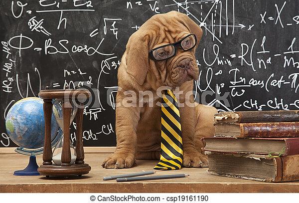chien, education - csp19161190