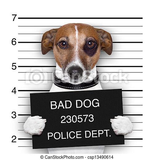 chien, mugshot - csp13490614