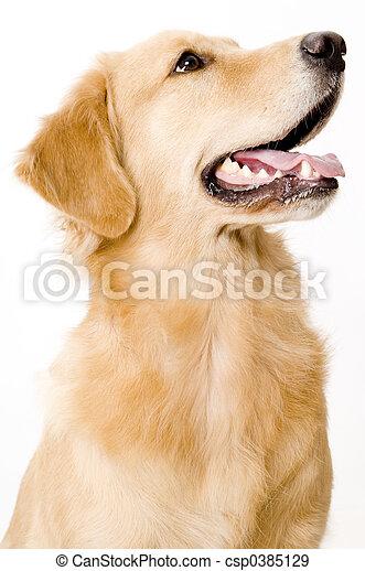 chien - csp0385129