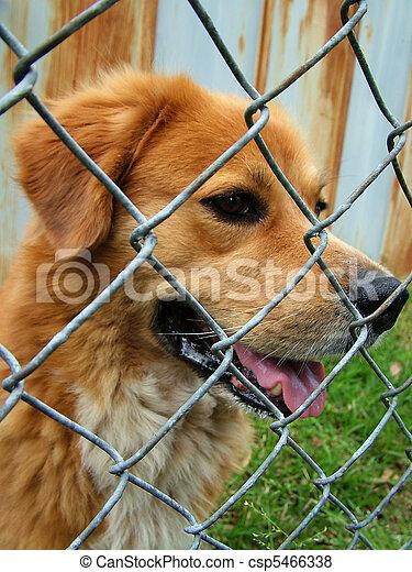 chien, piégé - csp5466338