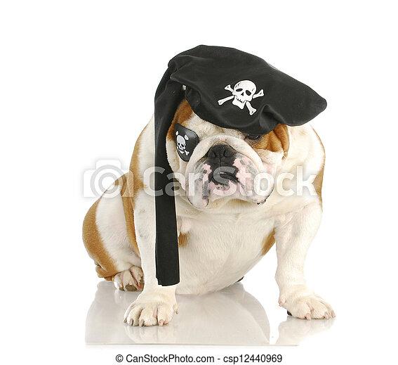 chien, pirate - csp12440969