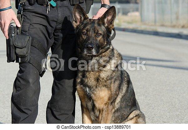 chien policier - csp13889701