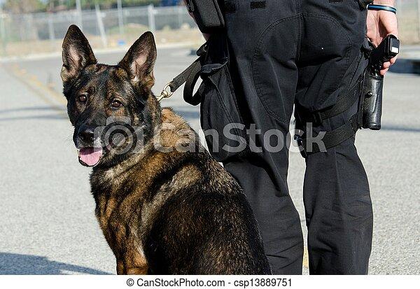 chien policier - csp13889751