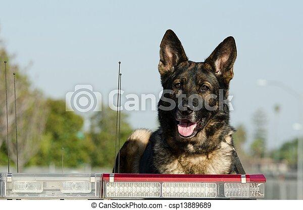 chien policier - csp13889689