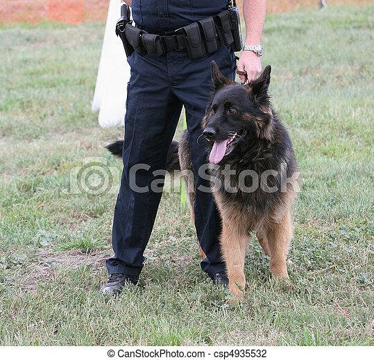chien policier - csp4935532