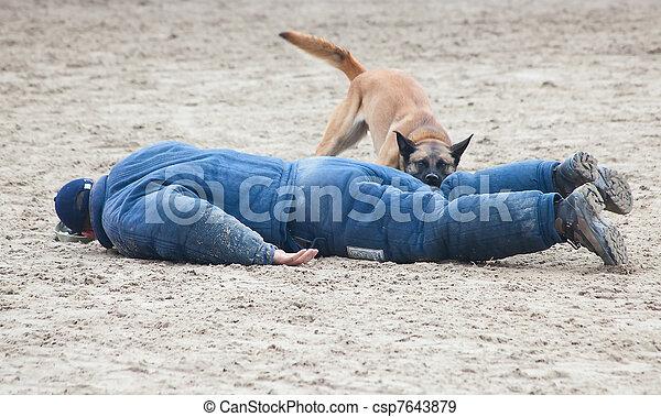 chien policier - csp7643879