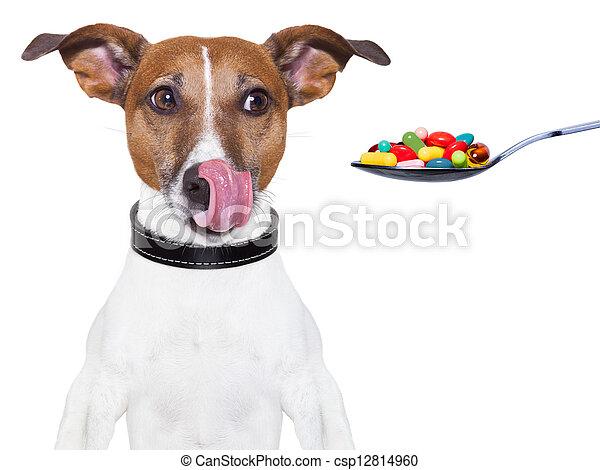 chien, suit régime pilules - csp12814960