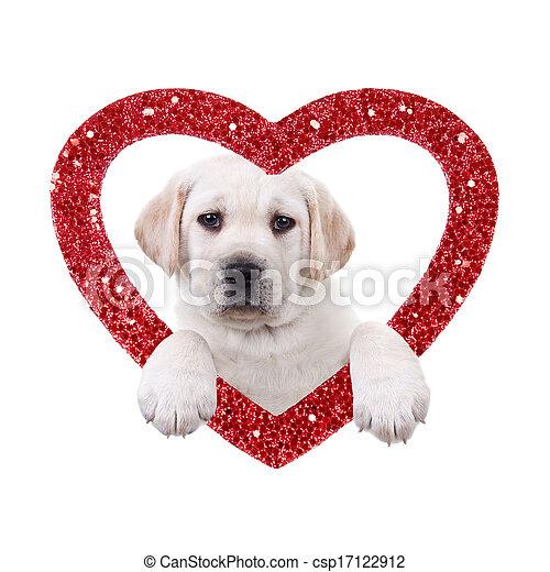 chien, valentin - csp17122912