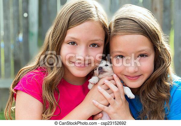 chihuahua, chouchou, chien, jumeau, soeurs, chiot, jouer - csp23152692