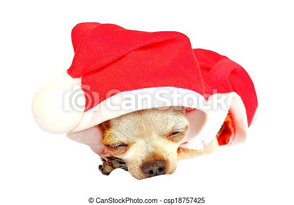 Chihuahua - csp18757425
