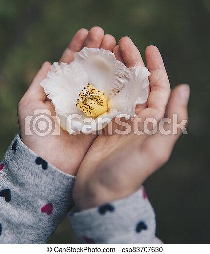 child holding flower of Stewartia pseudocamellia - csp83707630