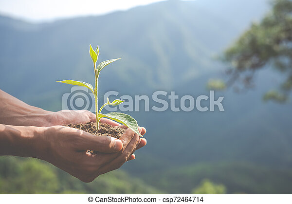children., 環境, 概念, 庭, 保存 - csp72464714