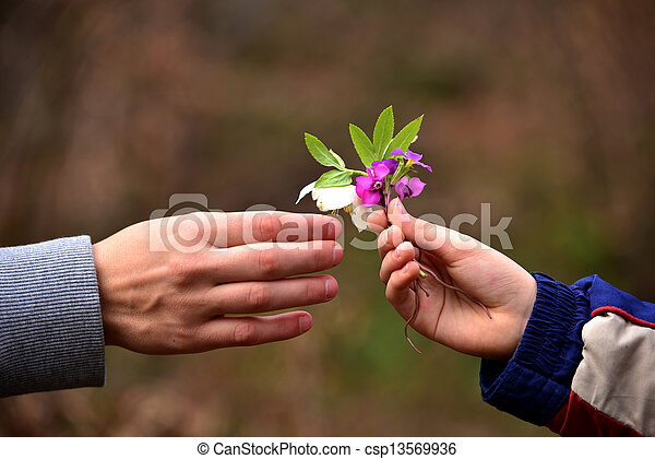 child's hand giving flowers to his father - csp13569936