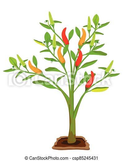 chili plant on white background vector design - csp85245431