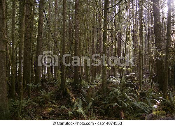 China Beach forest - csp14074553
