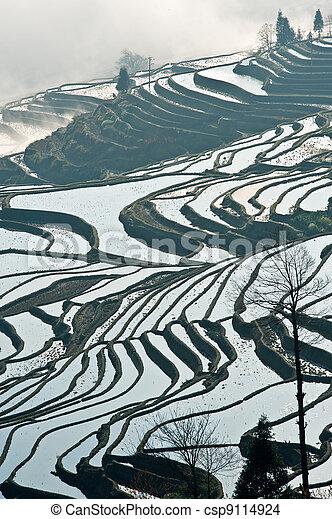 China Yunnan, Yuanyang terraced color - csp9114924