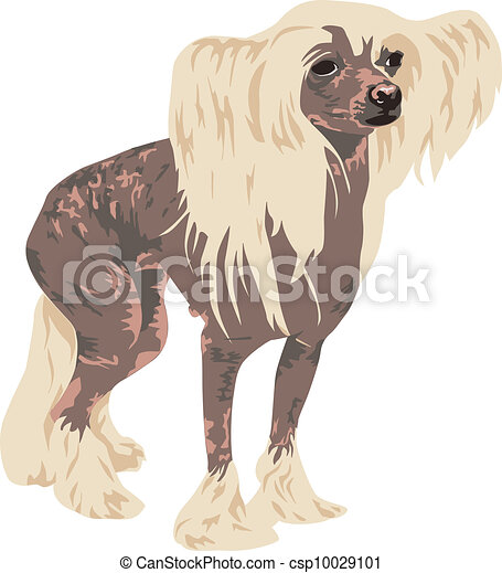Chinese Crested dog breed - csp10029101