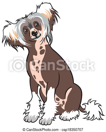 chinese crested dog  - csp18350707