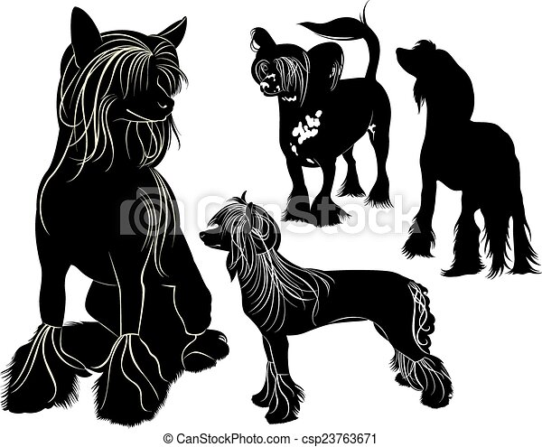 Chinese Crested - csp23763671