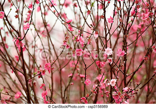 Chinese new year decoration flower-peach blossom stock photographs ...