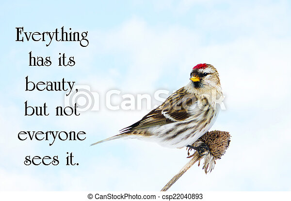 Chinese proverb about beauty in nature, with a pretty male common redpoll bird perched on a dead daisy stalk, eating seeds in the winter. - csp22040893