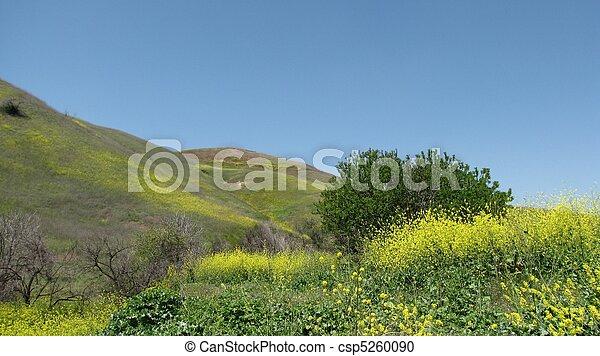 Chino Hills State Park - csp5260090