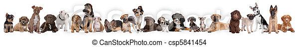 chiot, chiens, 22, rang - csp5841454