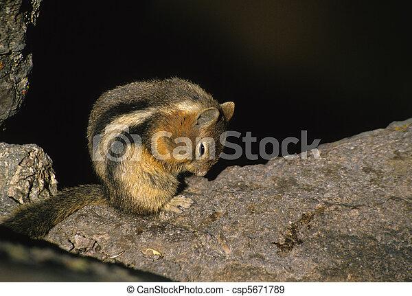 Chipmunk Cleaning Feet - csp5671789