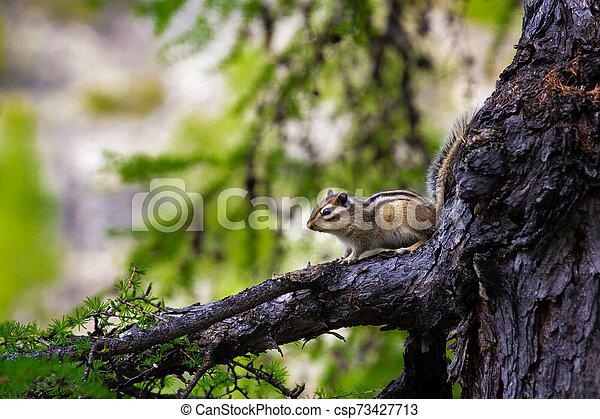 Chipmunk sitting on a branch - csp73427713