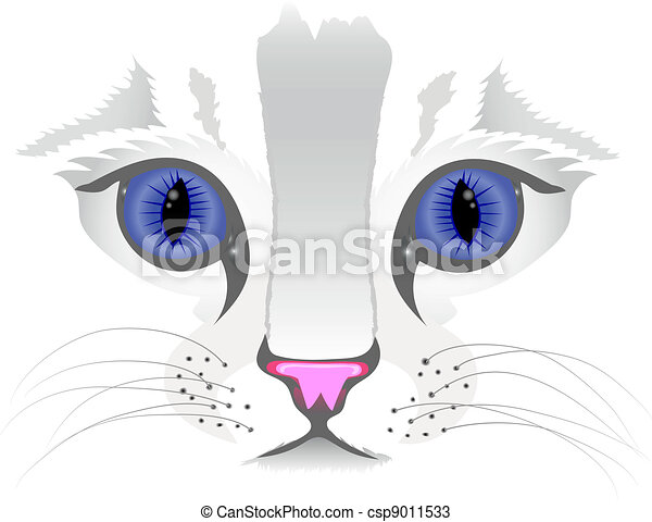 chiudere, gatto, su, faccia - csp9011533