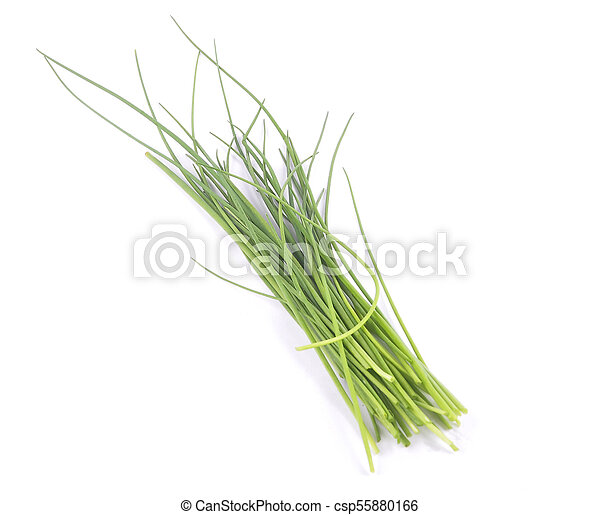 Chives on white background - csp55880166
