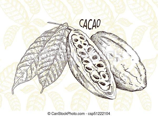 Chocolate cocoa beans - csp51222104