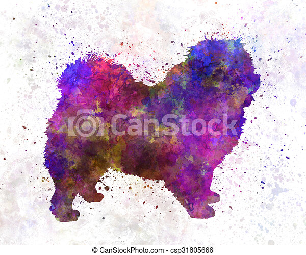 Chow Chow 01 In Watercolor