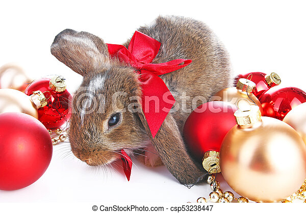 Christmas animals. Cute christmas rabbit. Rabbit bunny lop celebrate  christmas with xmas bauble ornaments on isolated white studio background.