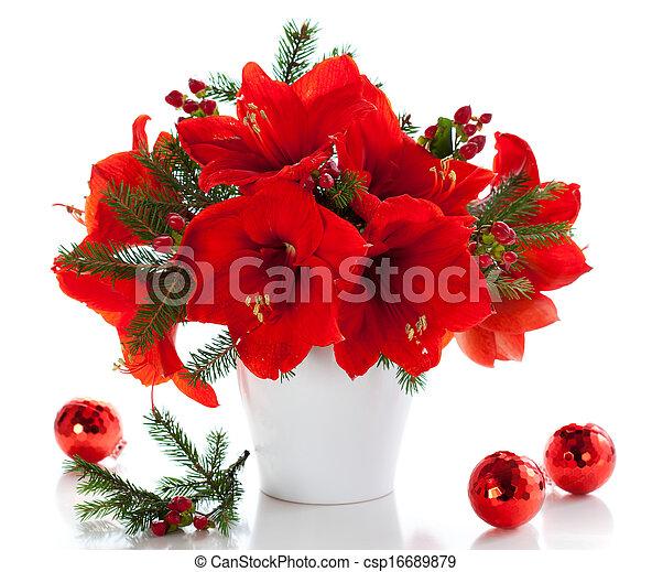 Christmas arrangement of amaryllis - csp16689879