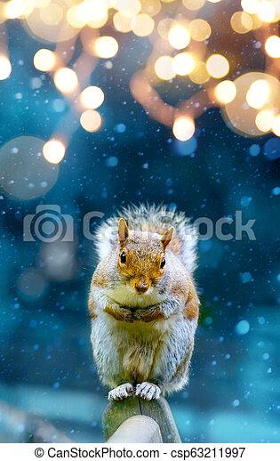 christmas banner background; cute squirrel in winter garden; - csp63211997