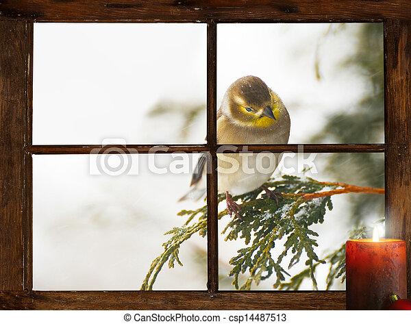 Christmas bird. - csp14487513