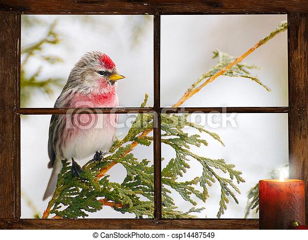 Christmas bird. - csp14487549