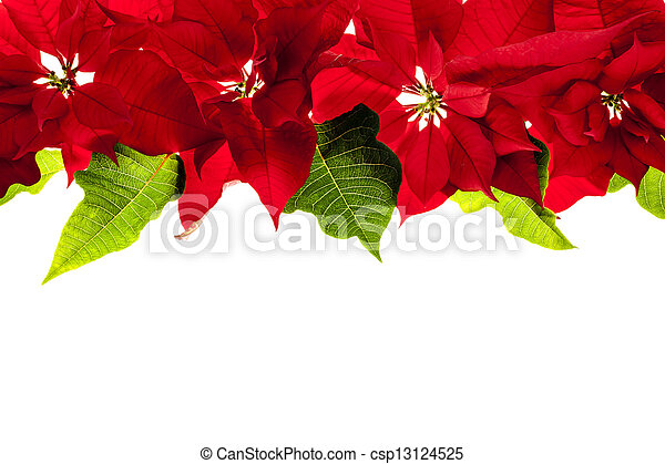 christmas border with red poinsettias csp13124525