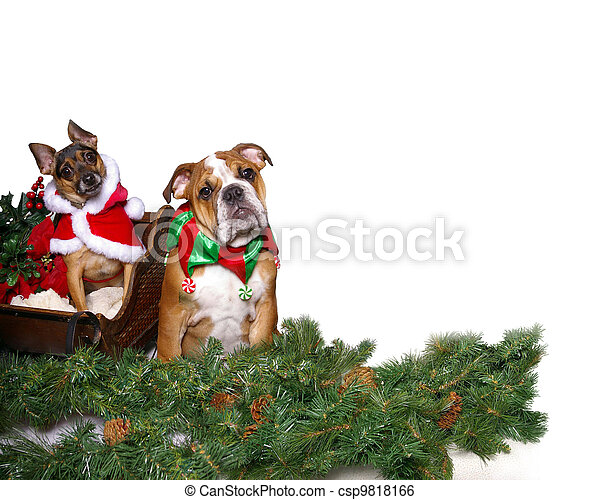 Christmas Canines - csp9818166