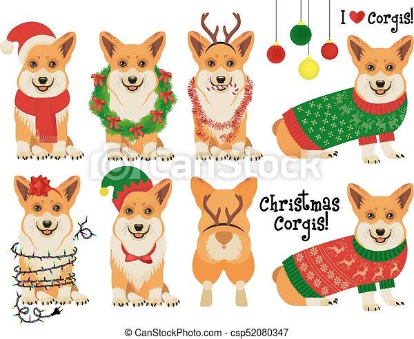christmas corgis vector illustration - Corgi Christmas