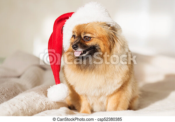 christmas dog happy new year card 2018 with the year dog symbol csp52380385