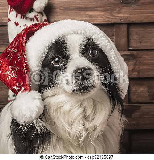Christmas dog Santa - csp32135697
