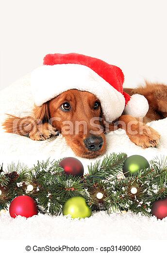Christmas dog - csp31490060