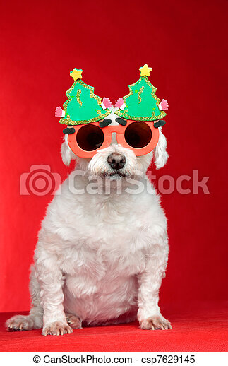 Christmas dog wearing glasses - csp7629145