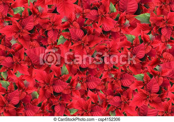 christmas flower background - csp4152306