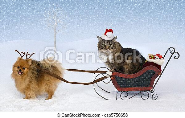 Christmas for Max & Jolie - csp5750658
