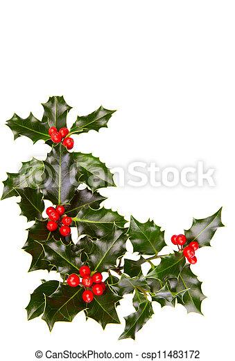Christmas holly - csp11483172