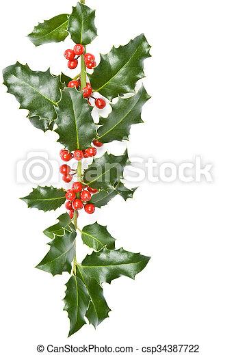 Christmas Holly - csp34387722