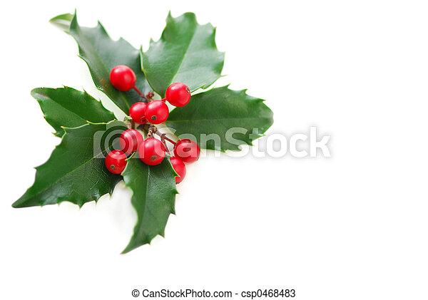 Christmas Holly - csp0468483